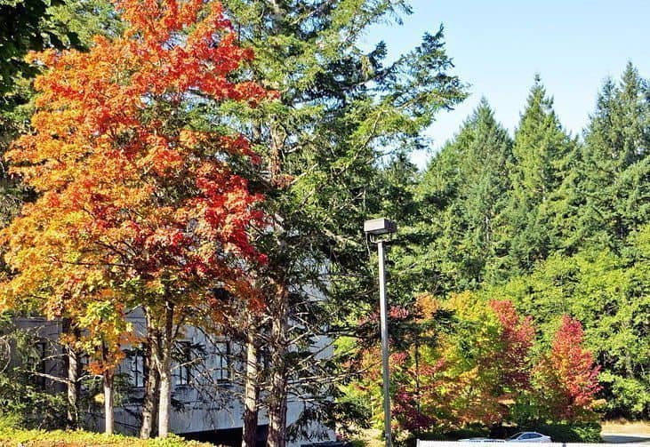 Evergreen_state_college